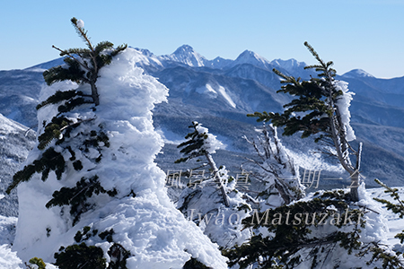 横岳の樹氷