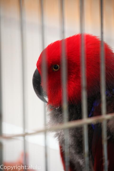 静岡市立日本平動物園 オオハナインコ