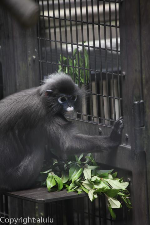 ズーラシア 国内 動物園 ダスキールトン