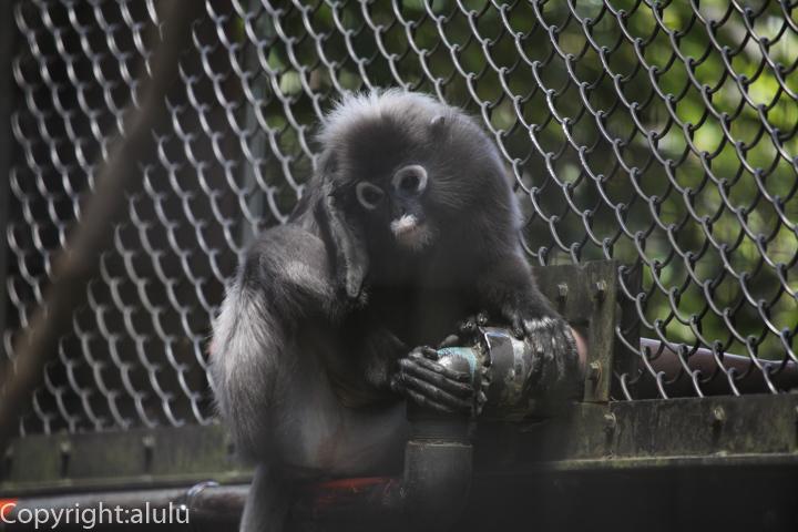 ダスキールトン 動物園