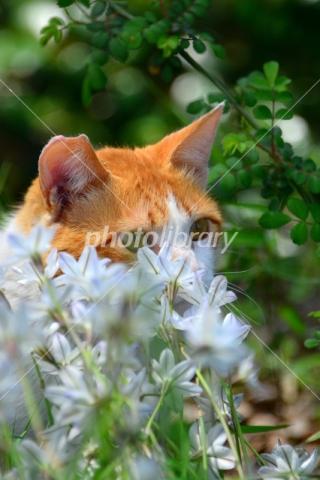 4965103 花影の猫