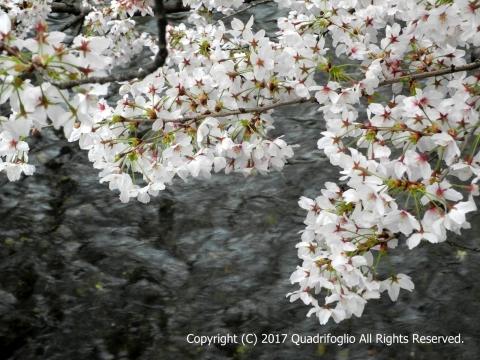 2017年 春の京都
