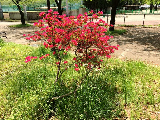春の草木2 by占いとか魔術とか所蔵画像