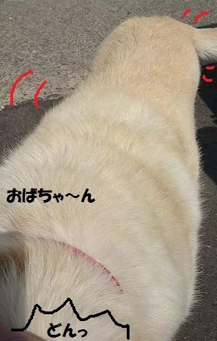 MOV_0063_000006.jpg