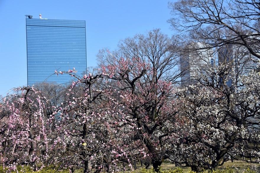 大阪城梅園 (0)