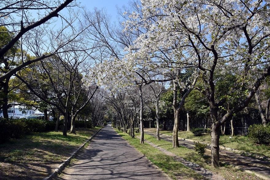 南港の桜 (0)
