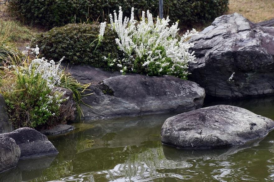 大仙日本・春 (13)