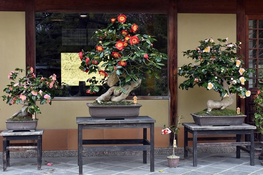 大仙日本・春 (16)