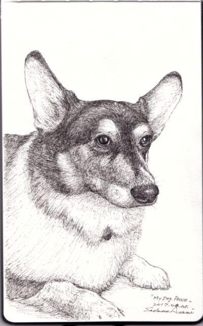 mydog 001