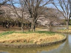 代々木公園 2n