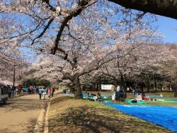 代々木公園 4n