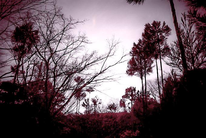 台杉のシルエット