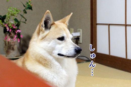 s-kikusui120402-IMG_5532