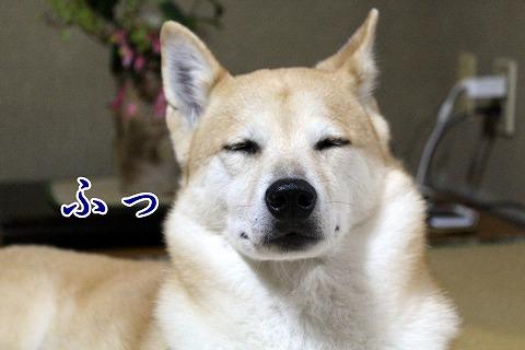 s-kikusui170407-IMG_5542