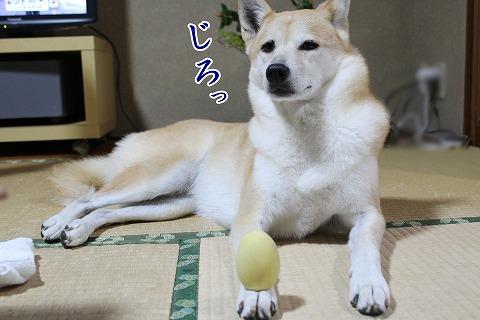 s-kikusui170407-3-IMG_5545