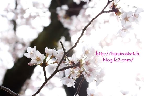 桜201704-11