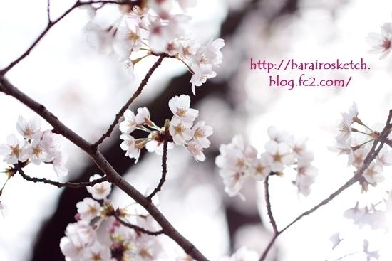 桜201704-16