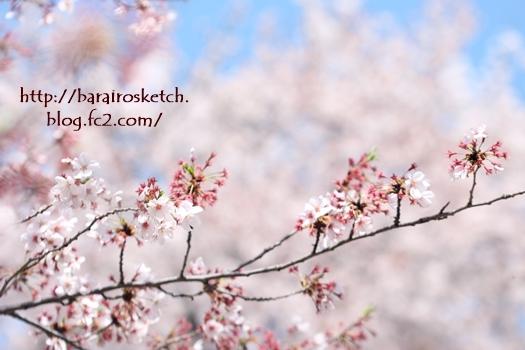 桜201704-25