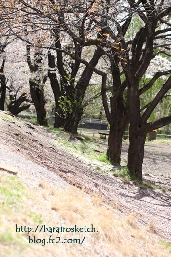 桜201704-28