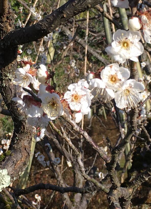早春の中村記念美術館のお庭