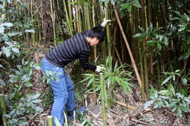 3月の高安山森林整備!