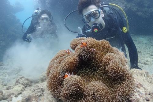 名護の海で体験ダイビング