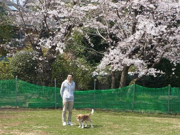 20170405桜と