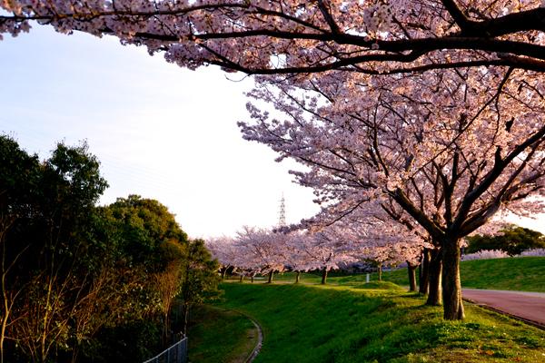 春いつもの風景