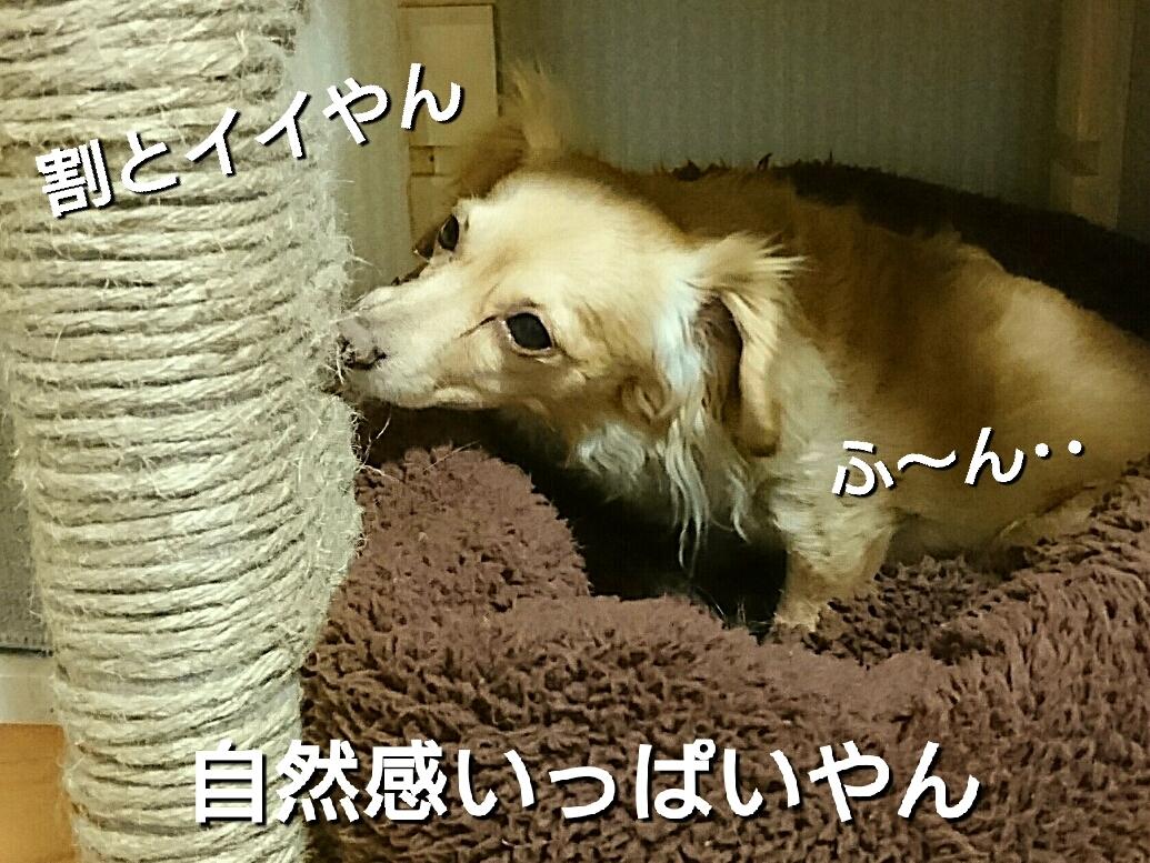 201703311410308a5.jpg