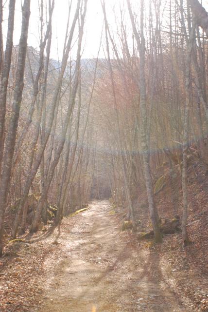 朝日が眩しい林道