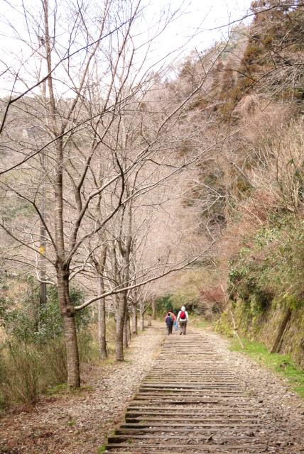 廃線跡_枕木と桜の樹