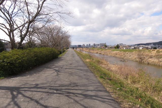 兵庫県三田市_武庫川堤防の桜並木