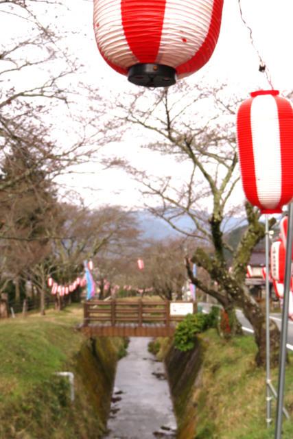 水分れ公園_桜まつり_提灯