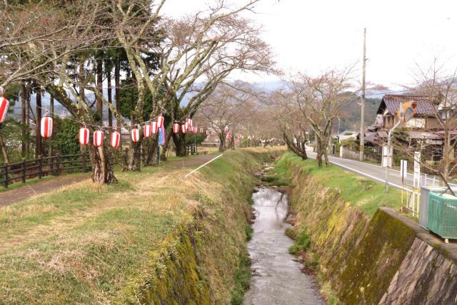 高谷川の堤防_桜まつり