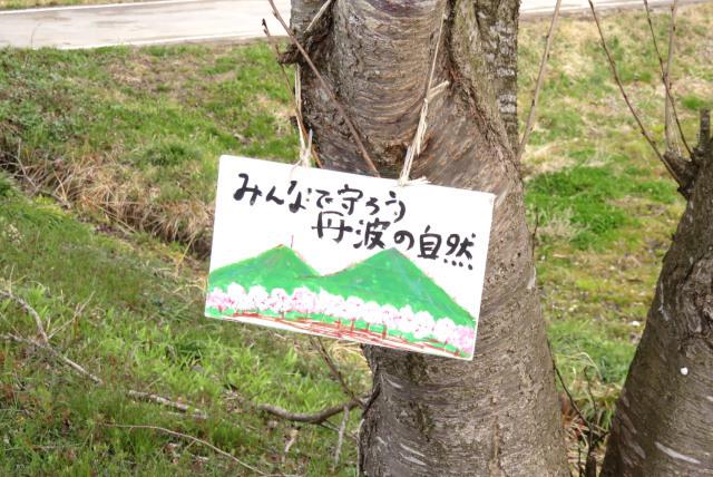 氷上_桜づつみ回廊_小学生が描いたプレート