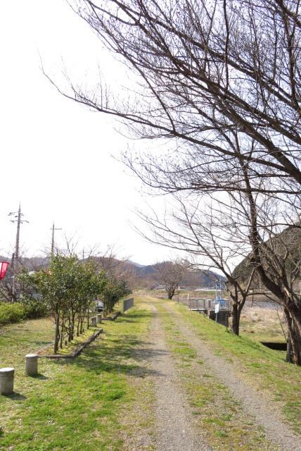 和田山_桜づつみ回廊