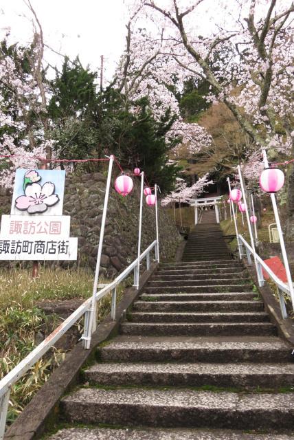 八鹿_諏訪神社_桜