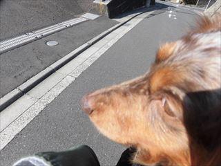 CIMG4670_R.jpg