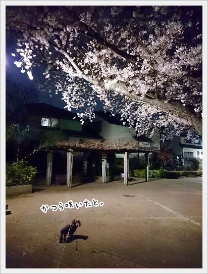 fc2_2017-04-07_01.jpg