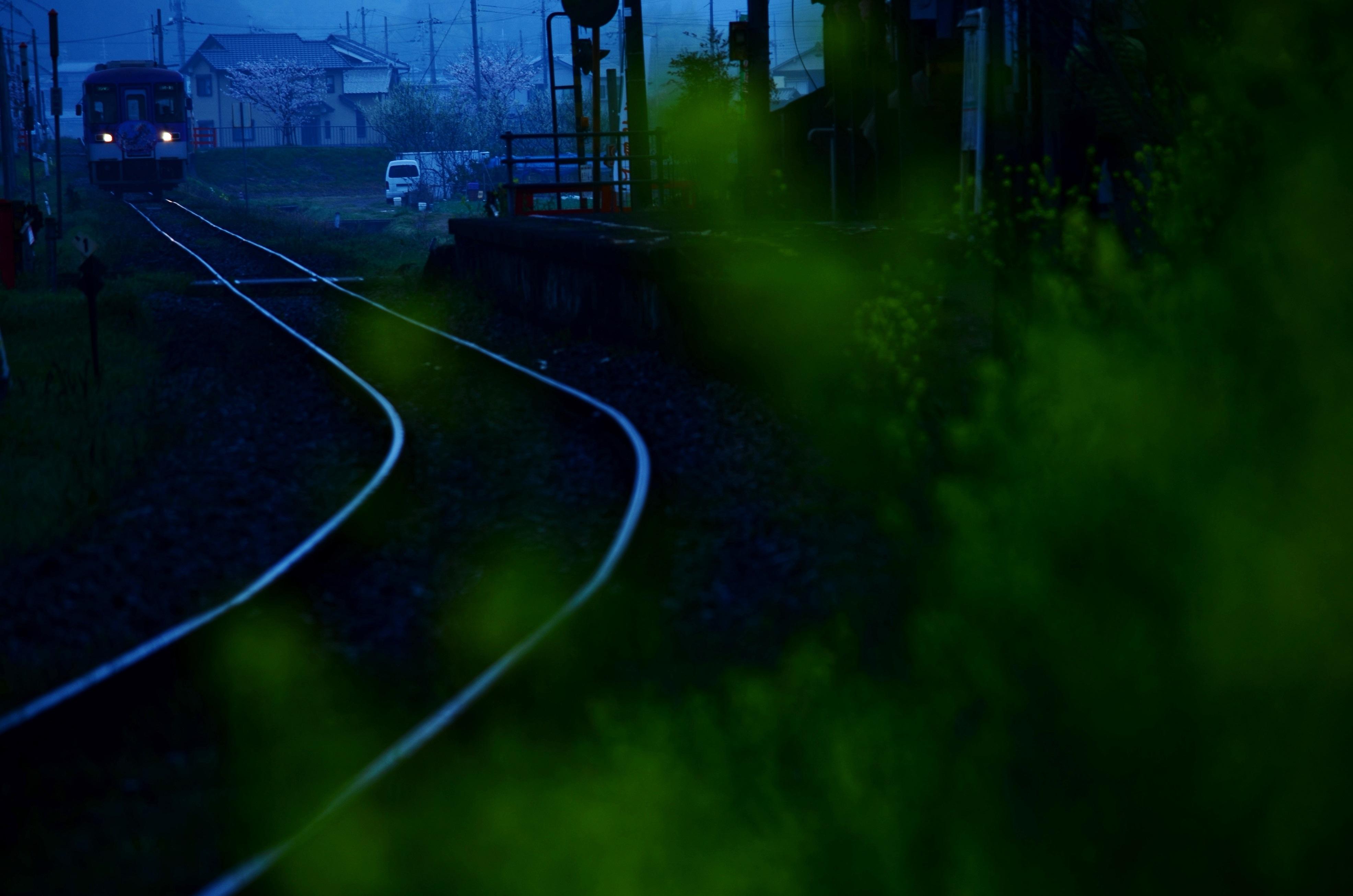 DSC_7437.jpg