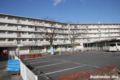瓦葺氷川神社(上尾市瓦葺)19