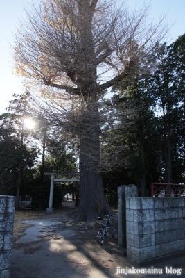 氷川神社(さいたま市見沼区丸ケ崎町)1