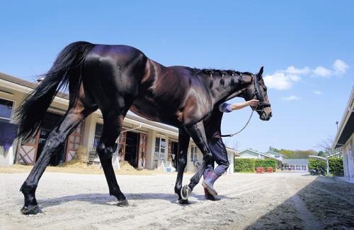 【天皇賞春】サトノキタサンの馬連にぶち込みたい