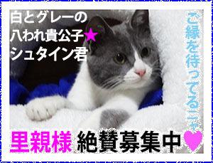 Banner_boshuShuta300.jpg