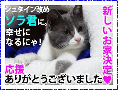 Banner_ketteiShuta_.jpg
