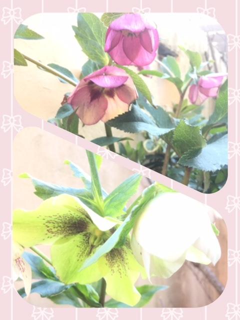 IMG_9478.jpg