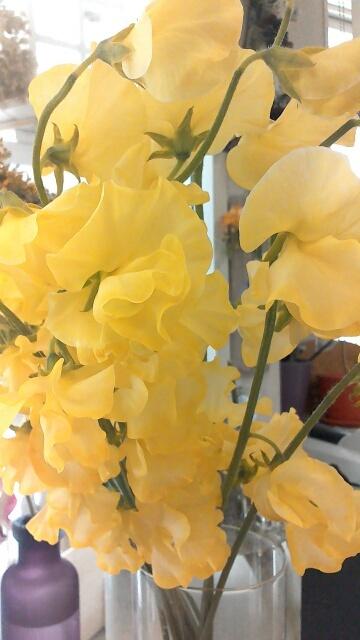 2月は黄色いお花がいいかも