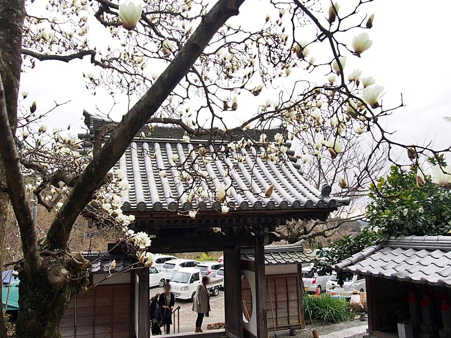 mokuren-20170312-06.jpg