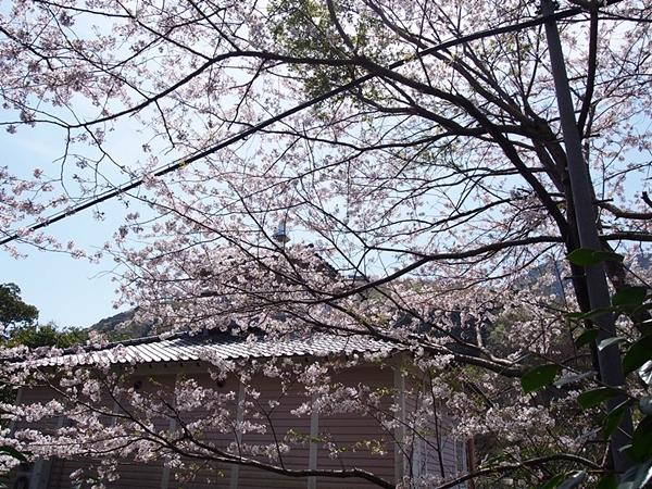 nakagawa-20170416-38s.jpg