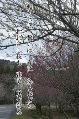 36f01-08.jpg